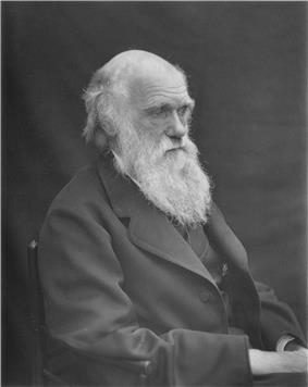Head and shoulders portrait, increasingly bald with rather uneven bushy white eyebrows and beard, his wrinkled forehead suggesting a puzzled frown