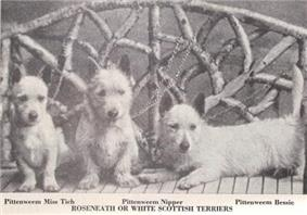 A black and white photo of three terriers. They appear looking nice and friendly thinner than a West Highland White Terrier and their bodies re longer.a
