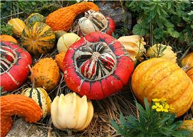 Several types and colors of Cucurbita