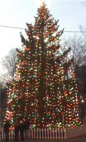 Tall evergreen decorated with strings of multicoloured lights