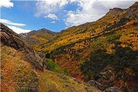 Aspen in Lamoille Canyon surrounded by mountains.