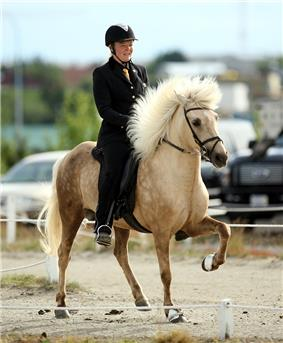 A tan colored horse with darker brown on its hindquarters being ridden in a dirt ring by a rider in black formal attire.