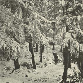 A Simla Road in Winter.jpg