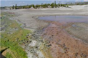 Green and red algae ground along the banks.