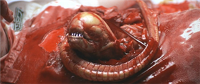 The head and tail of an alien creature is emerging from the ruptured chest cavity of a dead man. The small eyeless creature is beige in color, has sharp metallic-looking teeth and a long segmented tail. A significant amount of blood covers the creature and the man's body.
