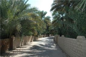 A sandy path lined by low walls behind which are many palm trees.