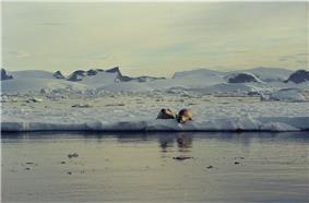 Antarctic (js) 7.jpg