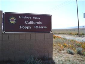 Antelope poppy reserve.jpg