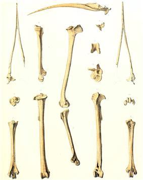 Photo of bones