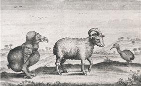 Drawing of a dodo, a one horned sheep and a red rail