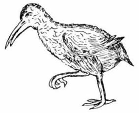 drawing of red rail