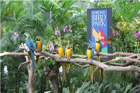 Blue-and-yellow Macaws perching on branches in front of a sign stating