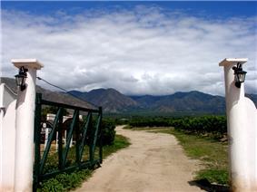 Argentine vineyard and mountains..jpg