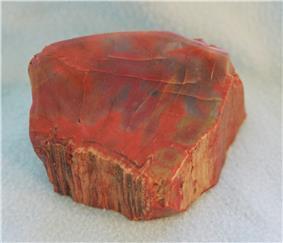 Petrified Araucarioxylon arizonicum