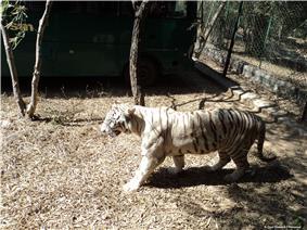 Bannerghata zoo.jpg