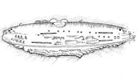 Line drawing of partially crushed battleship hull lying upside down on the seabed.