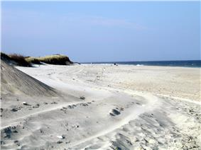 A windswept white sand beach with grassy dunes on the side, and the ocean in the distance.