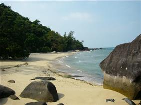 Shoreline of a beach in Pulau Tioman(Tioman Island) with large boulders at the water edge and a mangrove.