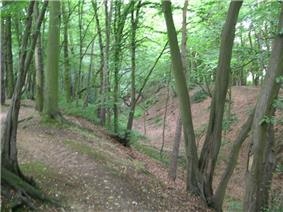 Image of a dry ditch overgrown with mature trees