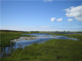 A marshy landscape of reeds, grass, water lilies and open water under blue skies with some white, fluffy clouds at left. A stone house sits on the horizon in the distance.