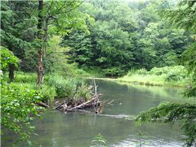 A smooth creek flows between two banks covered with lush vegetation