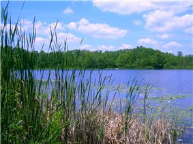 Benton Lake and surrounding forests.