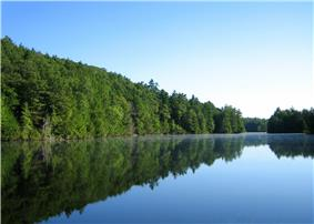 Pond mirroring green trees