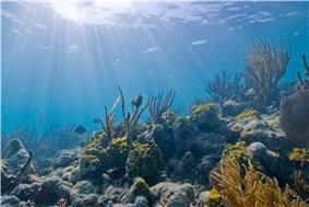 Sunlight on an underwater coral reef