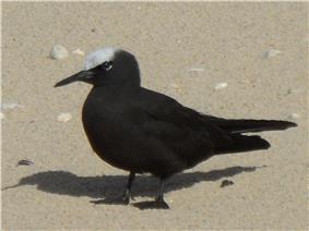 Photograph of a black bird on a beach