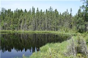 A photo of a lake and coniferous forests.