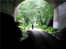 Tunnel opening onto trees and dog-walker
