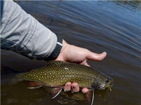 Photo of hand holding a trout