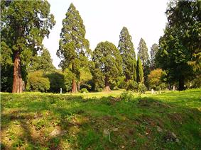 Grassy area lined with giant sequoia trees, with occasional scattered gravestones