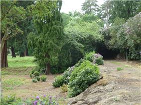 Heavily overgrown footpath on a raised earth bank