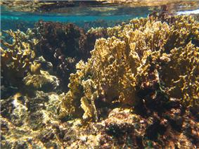 A photo of corals on the reef