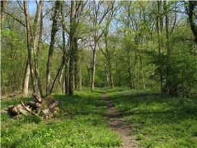 Open deciduous woodland