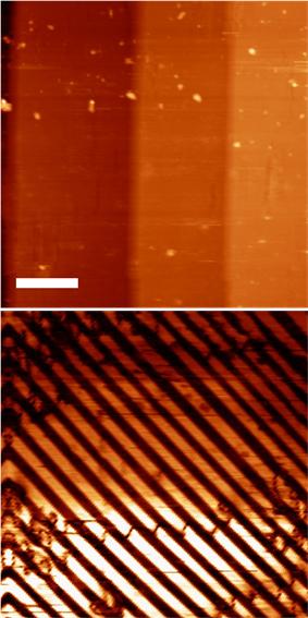 Piezoresponse Force Microscopy image of BaTiO3 domains