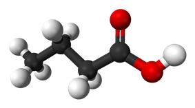 Space filling model of butyric acid