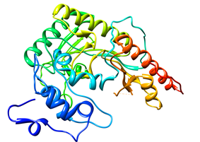 Colored schematic drawing of the creatine kinase enzyme