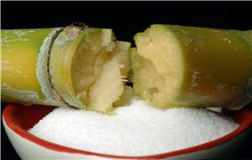 Close-up view of sugar cane & refined sugar