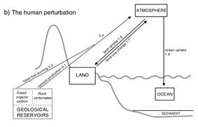 Human perturbation of the carbon cycle