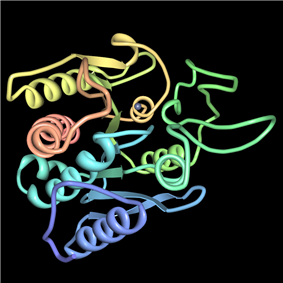 carboxypeptidase A
