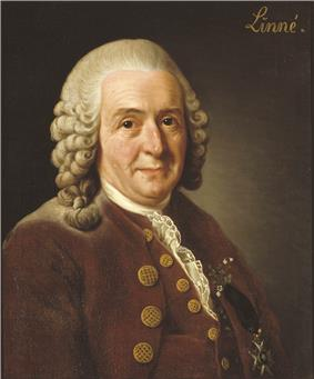 Portrait of Linnaeus on a brown background with the word
