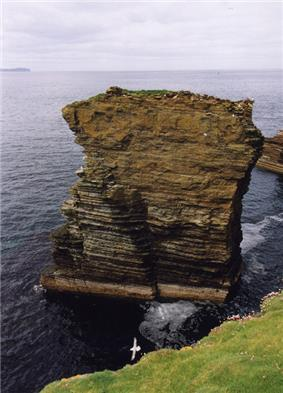 A brown stack composed of a sedimentary rocks sits in dark blue seas close to a grassy island. A white bird glides between the two.