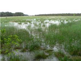 Čepkeliu marsh