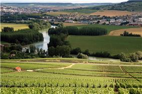 Colour photograph showing a leafy hillside in Champagne, overlooking a river in the distance.
