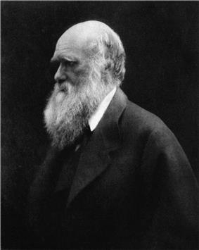 Three quarter length portrait of sixty-year-old man, balding, with white hair and long white bushy beard, with heavy eyebrows shading his eyes looking thoughtfully into the distance, wearing a wide lapelled jacket.