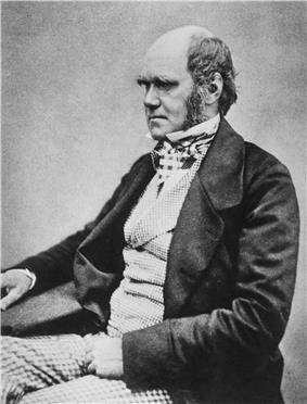 Three quarter length studio photo showing Darwin's characteristic large forehead and bushy eyebrows with deep set eyes, pug nose and mouth set in a determined look. He is bald on top, with dark hair and long side whiskers but no beard or moustache. His jacket is dark, with very wide lapels, and his trousers are a light check pattern. His shirt has an upright wing collar, and his cravat is tucked into his waistcoat which is a light fine checked pattern.