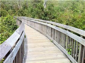 Paul F. Wildermann Boardwalk wooden raised platform walk through swamp area in park