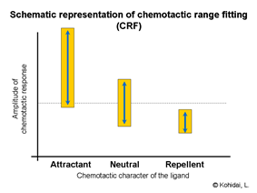 Chemotactic range fitting